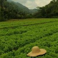 Organic Farms - Benguet Province