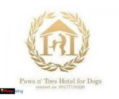 Paws n' Toes Hotel for Dogs