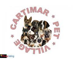 Cartimar Pet Village