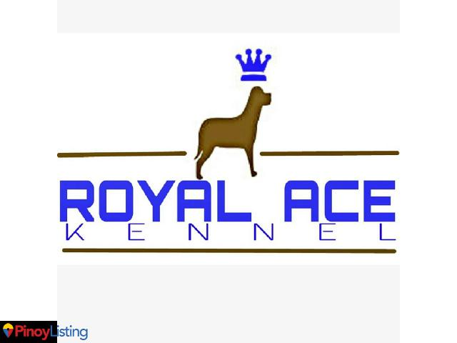 Royal Ace Kennel