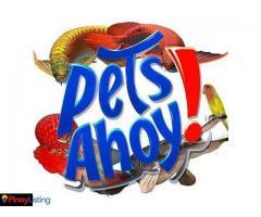 Pet's Ahoy
