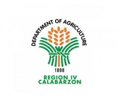 Department of Agriculture Region 4A