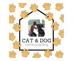 Philippines Cat and Dog Boarding