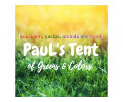Paul's Tent of Greens & Colors