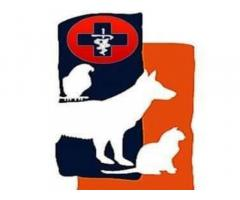 PetCure Veterinary Clinic and Grooming Center
