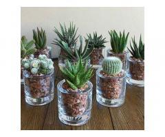 Cactus & Succulent Babies