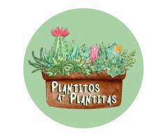 Plantitos at Plantitas