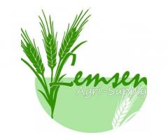 Hybrid Variety of Rice Seeds