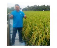 Sl Agritech Corporation Region 8