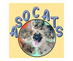 ASOCATS: Pet Food & Transportation
