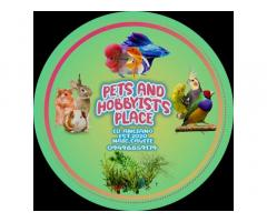 Pets and Hobbyist's Place Online Petshop