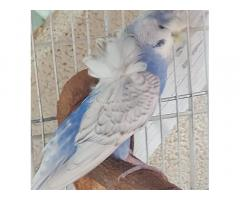 D. Guinto Pet and Poultry Supply