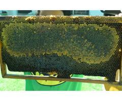 Noliboy General Enterprises and Bee Farm