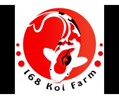 168 Koi Farm