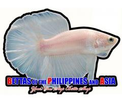 Bettas of the Philippines and Asia