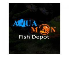 AquaMon's Fish Depot