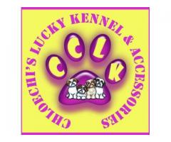 ChloeChi's Lucky Kennel & Accessories