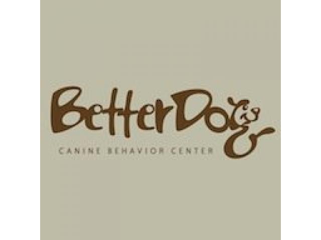 BetterDog Canine Behavior Center