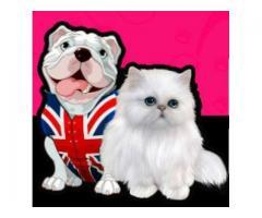 Rosmar Pet Salon