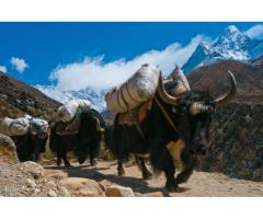 Alpine Eco Trek and Expedition (P.) Ltd.