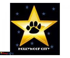 HOLLYWOOF CITY