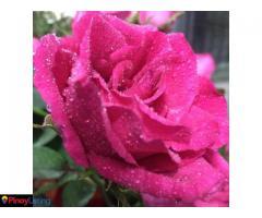 AJW Blossoms