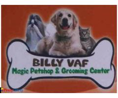 BILLY VAF MAGIC Petshop