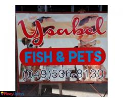 Ysabel Fish & Pets