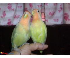 Edward's Bird House