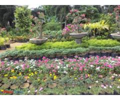 Xyxejuxan Garden & Landscape Services
