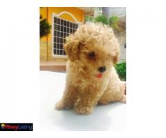 DCs Online Pet Shop
