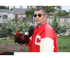 St. Bernadette Game Fowl Farm