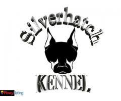 Silverhatch Kennel